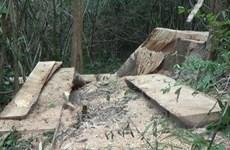 Vụ phá rừng tại Đắk Lắk: Hơn 40m3 gỗ các đối tượng chưa kịp chuyển đi