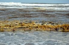 Quảng Ngãi: Nước biển đổi sang màu xám đen chưa rõ nguyên nhân