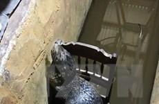 Hình ảnh con vật nghi là hải cẩu tại một nhà dân ở Thừa Thiên-Huế