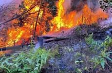 Vĩnh Phúc: Cháy rừng trên núi Thằn Lằn thuộc thành phố Phúc Yên