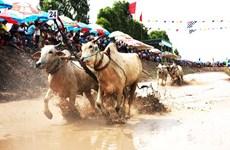 Về An Giang chứng kiến vẻ đẹp dân gian trong lễ hội đua bò Bảy Núi