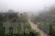 Từ 26/12, không khí lạnh gây mưa Bắc Bộ và Trung Bộ, trời trở rét