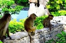 Đảo Khỉ - địa điểm thú vị khi ghé thăm thành phố Nha Trang xinh đẹp