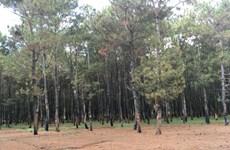 Gia Lai: Chỉ đích danh 10 Ban quản lý rừng 'chây ì' nộp tiền sai phạm