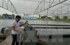 Khởi nghiệp thành công với mô hình tạo 'sông trong ao'
