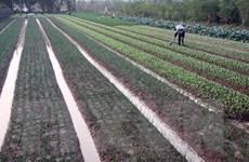 Từ 1/1/2020, Hà Nội áp dụng bảng giá đất với mức tăng bình quân 15%