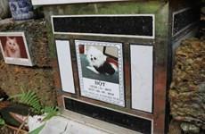 Nghĩa trang cho thú cưng, một hiện tượng mới lạ ở Việt Nam