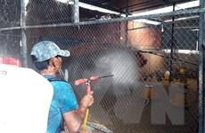 'Thủ phủ' chăn nuôi Đồng Nai chủ động phòng chống dịch cúm A/H5N1