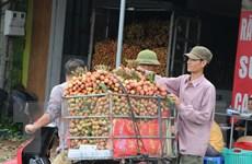 Chuẩn bị các điều kiện cần thiết để xuất vải quả tươi sang Nhật Bản