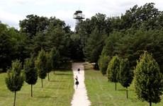 Hungary trồng 10 cây xanh mỗi khi có một đứa trẻ chào đời