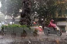 Hà Nội: Mưa lớn diện rộng, một chiếc ôtô bị cây đổ đè bẹp