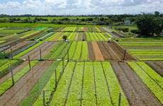 EVFTA: Rộng đường cho ngành nông nghiệp Việt Nam xuất khẩu