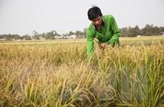 Chàng trai 24 tuổi khởi nghiệp từ niềm đam mê nông sản sạch
