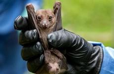 """WHO cho rằng """"rất nhiều khả năng"""" SARS-CoV-2 xuất phát từ động vật"""