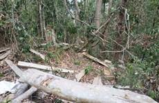 Khởi tố thêm một đối tượng trong vụ phá rừng nghiêm trọng tại Đăk Tô