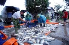 Tăng xuất khẩu thủy sản sang thị trường bị ảnh hưởng bởi COVID-19