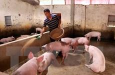 Thứ trưởng Phùng Đức Tiến: Giảm áp lực về nguồn cung đàn lợn giống