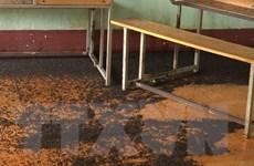 Bọ đậu đen bâu kín các ngóc ngách trường học tại Bình Phước
