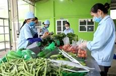 Campuchia chưa có văn bản nào cấm nhập khẩu rau, củ, quả Việt Nam