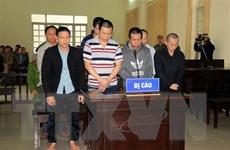 Xử sơ thẩm 7 đối tượng trong vụ hạ độc hàng ngàn cây thông ở Lâm Đồng