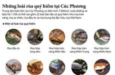 [Infographics] Những loài rùa quý hiếm tại Cúc Phương