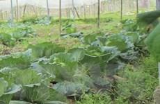 Chưa có thông tin chính thức việc Campuchia cấm nhập 6 loại nông sản