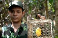 Đà Nẵng: Phá bẫy, cứu thú tại khu bảo tồn thiên nhiên Sơn Trà