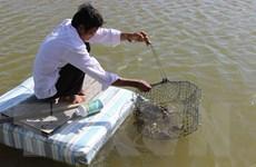 Cà Mau đưa ra nhiều giải pháp phục hồi chế biến và xuất khẩu thủy sản
