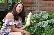 Bị ngộ độc sau khi ăn bí ngòi tự trồng trong vườn nhà