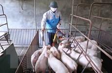 Việt Nam đủ khả năng xét nghiệm và phát hiện virus cúm lợn