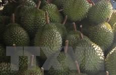 Đắk Lắk: Chủ vựa sầu riêng phản đối tổ công tác chống thất thu thuế
