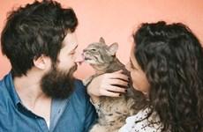 Ứng dụng hẹn hò dành riêng cho những người yêu mèo