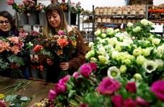 """Pháp hy vọng cạnh tranh với Hà Lan nhờ phong trào """"Hoa nở chậm"""""""
