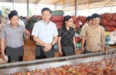 Nông, lâm, thủy sản xuất siêu trong 8 tháng đạt 6,2 tỷ USD