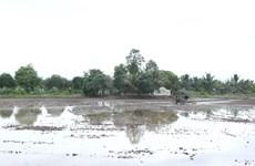 Ứng phó nguy cơ hạn hán, thiếu nước, xâm nhập mặn ở ĐBSCL