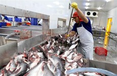 12 doanh nghiệp được xuất khẩu lại thủy sản đánh bắt vào Saudi Arabia