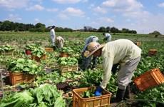 RCEP sẽ tạo ra cơ hội mới cho các nhà sản xuất và nông dân Nhật Bản