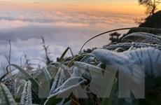 Vùng núi cao Bắc Bộ rét đậm, xuất hiện băng giá và sương muối