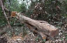 """Họp báo thông tin về vụ rừng Mường Phăng bị """"rút ruột"""" nghiêm trọng"""