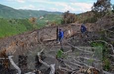 Phú Yên kỷ luật nhiều cán bộ, đảng viên liên quan đến vụ phá rừng