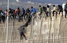 150 người di cư phá đổ hàng rào tại biên giới Tây Ban Nha-Maroc