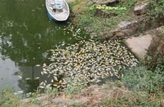 Bình Dương: Cá chết trong công viên Thanh Lễ được xả ra kênh Bưng Cải