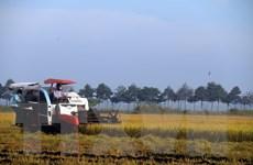 Cơ cấu lại nông nghiệp gắn với chuyển đổi tăng trưởng theo chiều sâu
