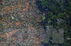 Cộng đồng thổ dân sống trong rừng Amazon kiện chuỗi cửa hàng Casino