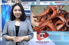 [Audio] Phẫn nộ trước tình trạng hại chết sao biển để chụp ảnh sống ảo