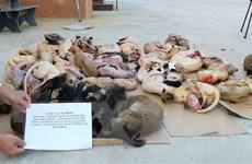 Thúc đẩy chiến lược chống tội phạm buôn bán loài hoang dã