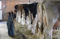 Canada đáp trả Mỹ sau cáo buộc phá vỡ thỏa thuận mở cửa thị trường sữa