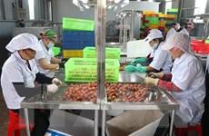 Hải Dương có thêm hai cơ sở xử lý quả vải xuất khẩu sang Nhật Bản