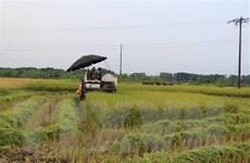 Ngày mùa đặc biệt của người nông dân vùng dịch Bắc Ninh
