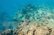 Các chuyên gia ủng hộ kế hoạch của UNESCO với rạn san hô Great Barrier
